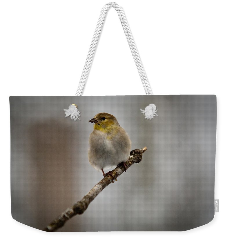 American Weekender Tote Bag featuring the photograph American Golden Finch Winter Plumage by Douglas Barnett