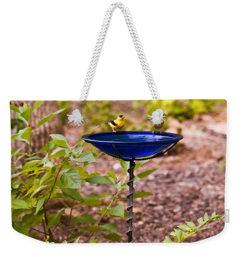 Cumberand Weekender Tote Bag featuring the photograph American Goldfinch At Water Bowl by Douglas Barnett