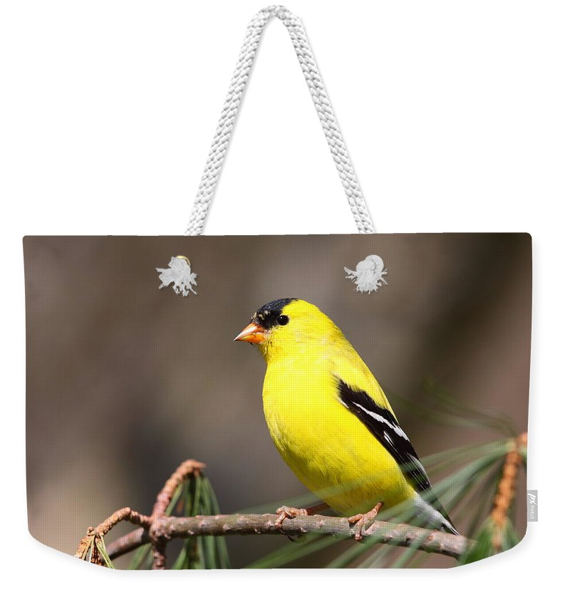 Goldfinch Weekender Tote Bag featuring the photograph American Goldfinch II by Bruce J Robinson