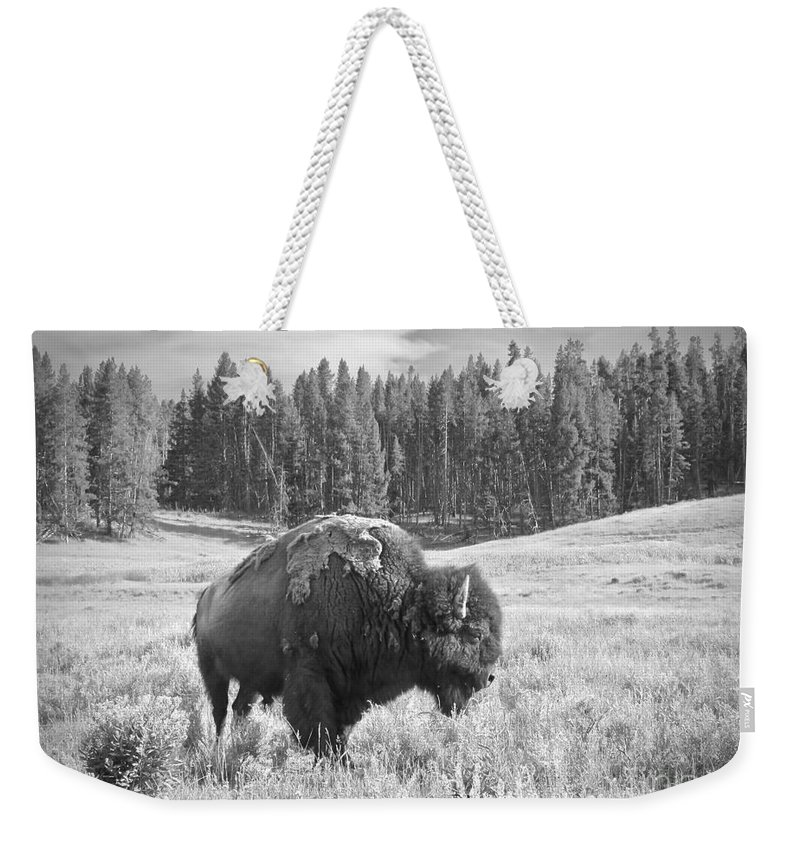 Bison Weekender Tote Bag featuring the photograph American Icon by Aimee Mouw