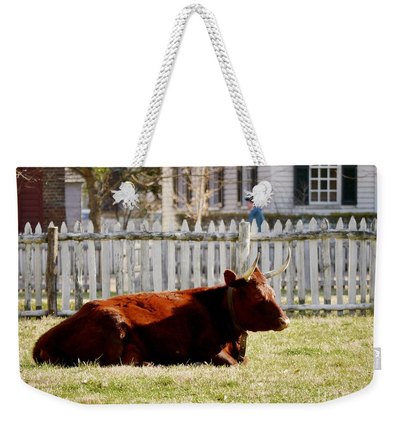 Cow Weekender Tote Bag featuring the photograph American Milking Devon In Spring by Rachel Morrison