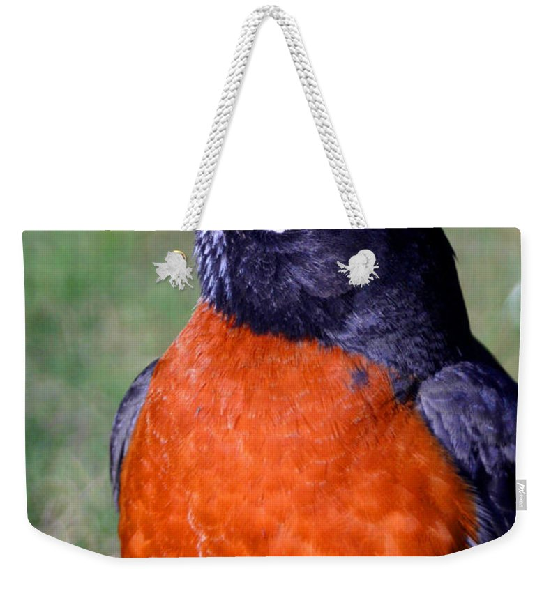 Bird Weekender Tote Bag featuring the photograph American Robin by Karol Livote