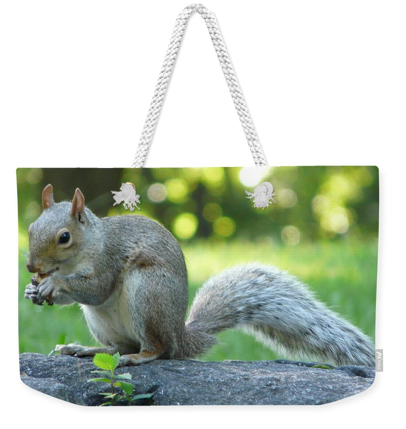 New York Weekender Tote Bag featuring the photograph American Squirrel by Valerie Ornstein