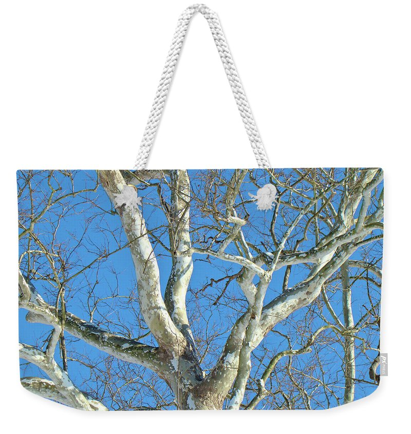 Sycamore Weekender Tote Bag featuring the photograph American Sycamore - Platanus Occidentalis by Mother Nature