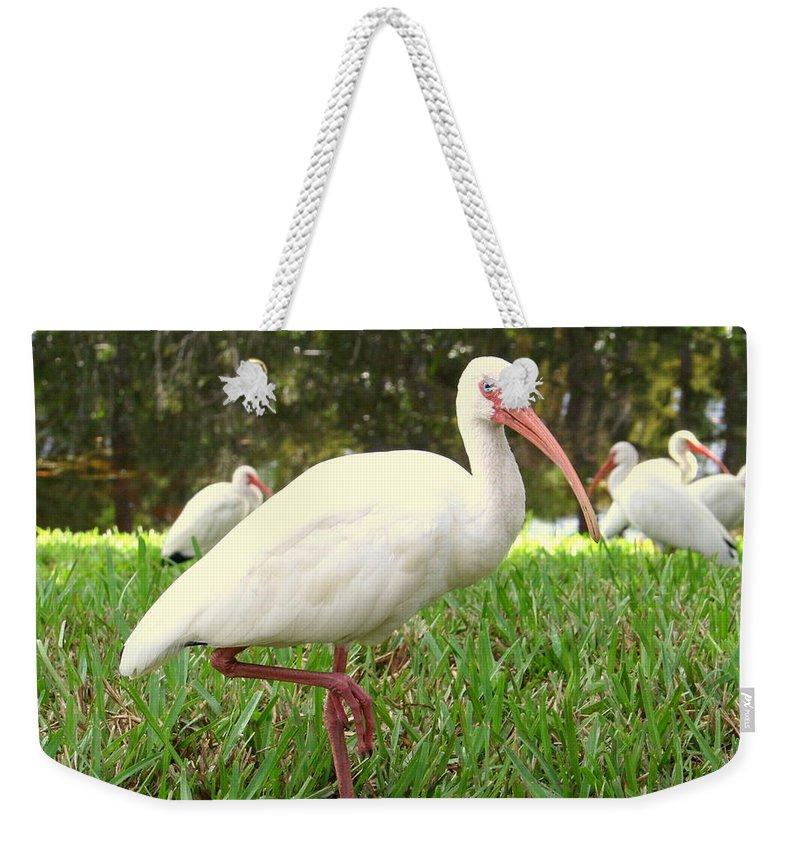 White Weekender Tote Bag featuring the photograph American White Ibis Birds In Orlando, Florida by Anita Hiltz