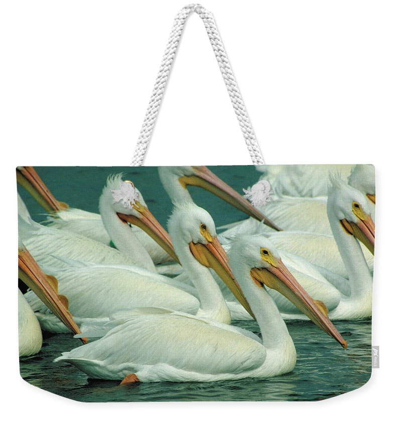 White Pelicans Weekender Tote Bag featuring the photograph American White Pelicans by Bruce Morrison