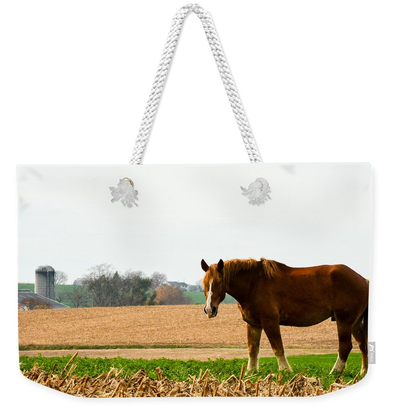 Landscape Weekender Tote Bag featuring the photograph Amish Work Horse by Jennifer Wick