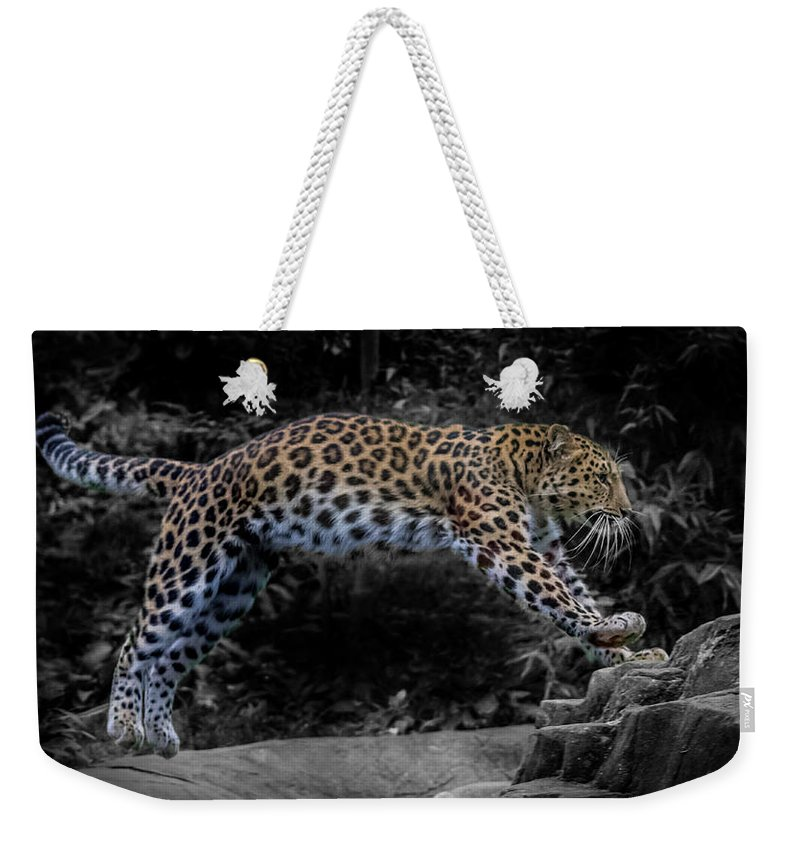 Amur Leopard.leopards Weekender Tote Bag featuring the photograph Amur Leopard On The Hunt by Martin Newman