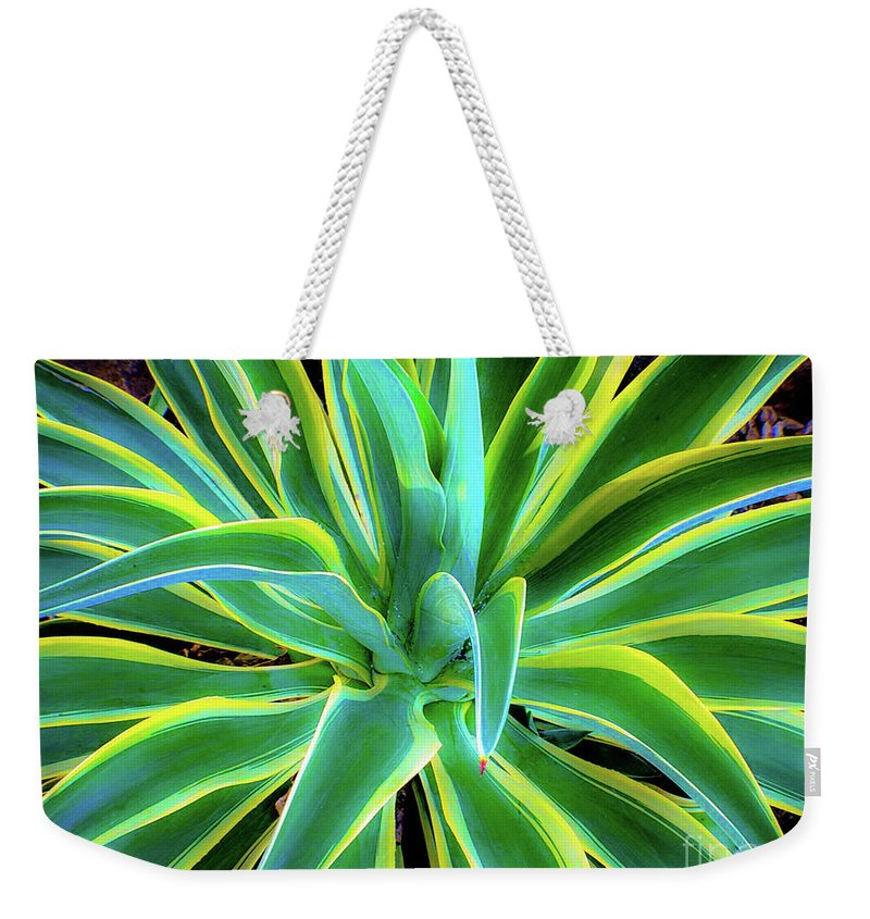 Agave Weekender Tote Bag featuring the photograph An Agave In Color by D Davila