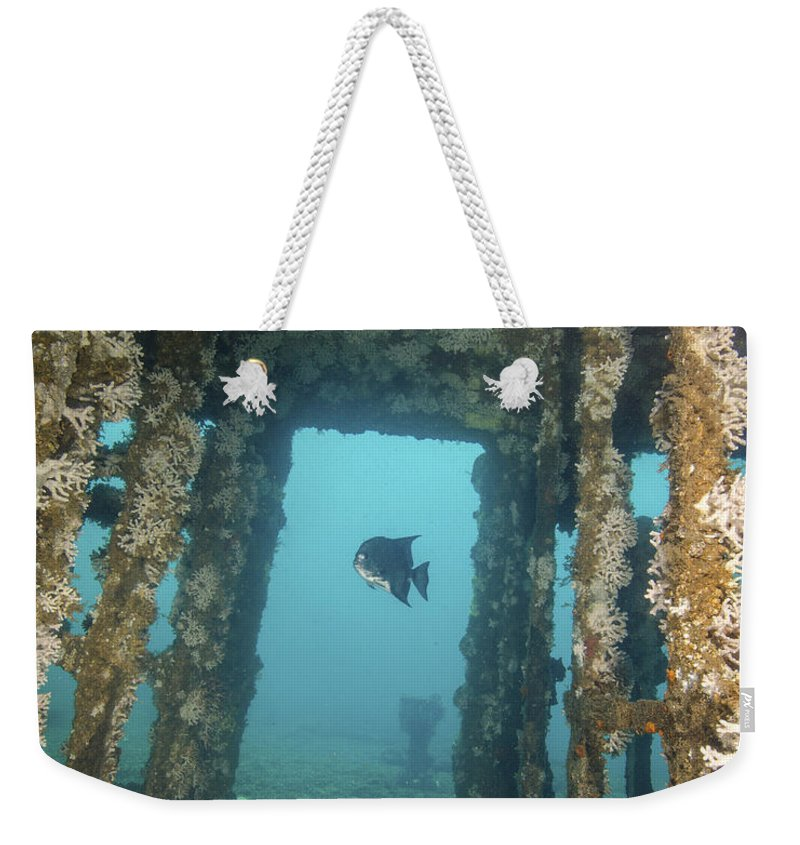 North Carolina Weekender Tote Bag featuring the photograph An Atlantic Spadefish Swims Amongst by Brent Barnes