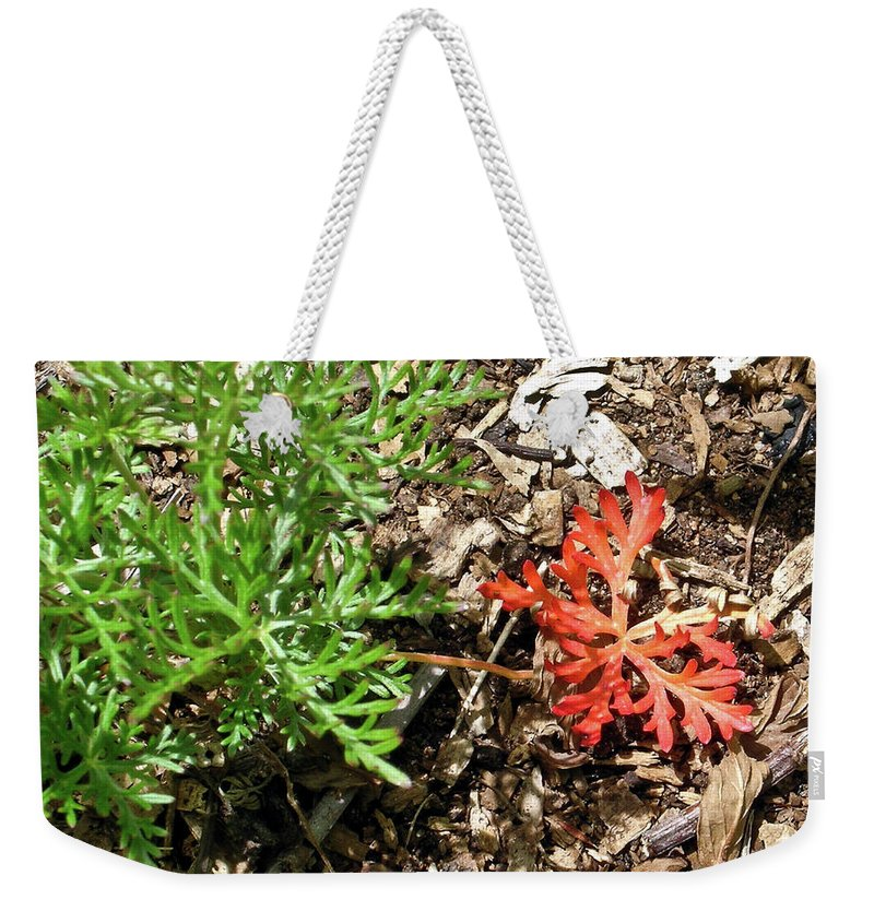 Oddity Weekender Tote Bag featuring the photograph An Oddity Of Nature by Douglas Barnett