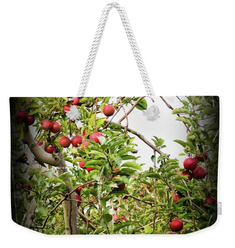 Apple Tree Weekender Tote Bag featuring the photograph An Old Apple Tree by Randy J Heath