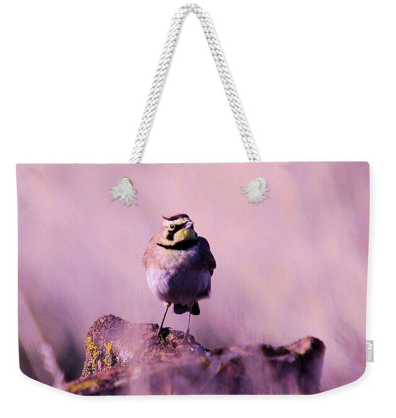 Birds Weekender Tote Bag featuring the photograph An Searching Gaze by Jeff Swan