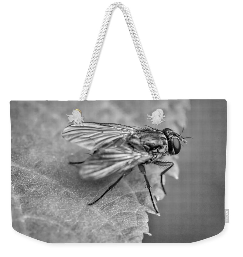 Steve Harrington Weekender Tote Bag featuring the photograph Anatomy Of A Pest - Bw by Steve Harrington