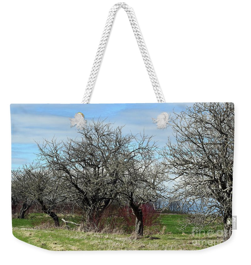 Spring Weekender Tote Bag featuring the photograph Ancient Apples Budding Out by William Tasker