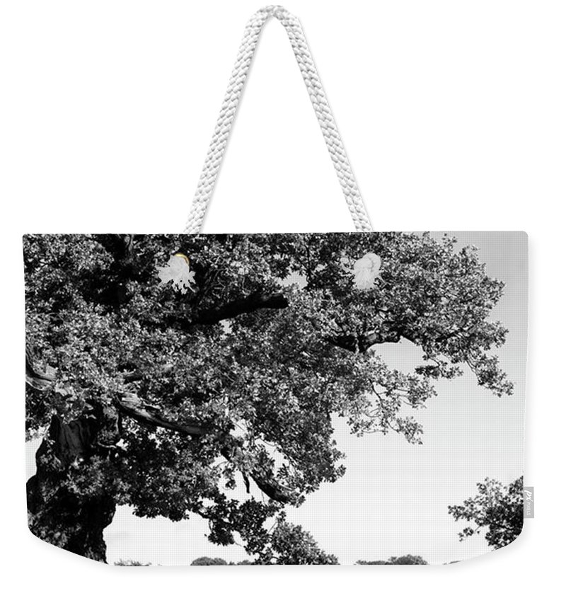 Woodland Weekender Tote Bag featuring the photograph Ancient Oak, Bradgate Park by John Edwards