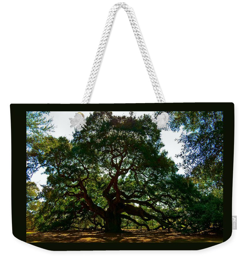 Tree Weekender Tote Bag featuring the photograph Angel Oak Tree 2004 by Louis Dallara