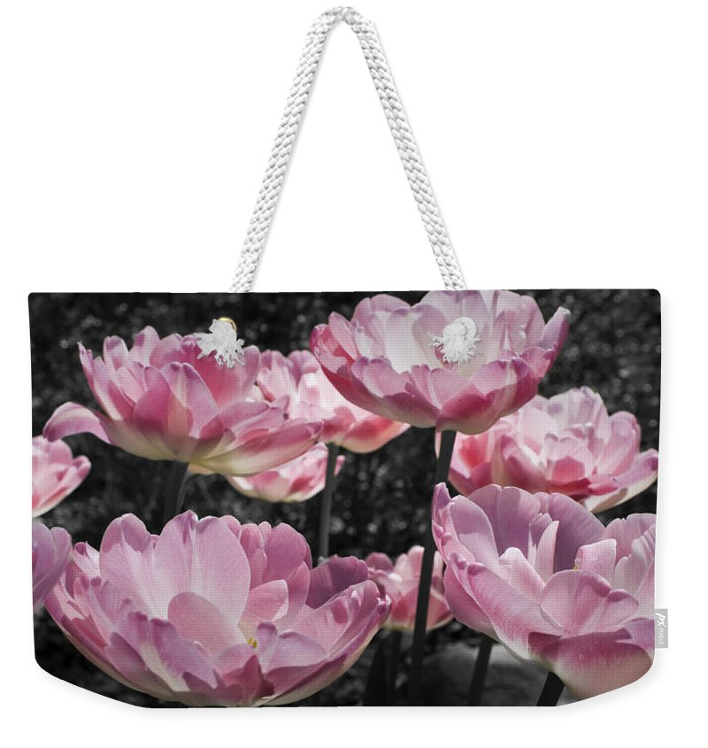 Pink Weekender Tote Bag featuring the photograph Angelique Peony Tulips by Teresa Mucha