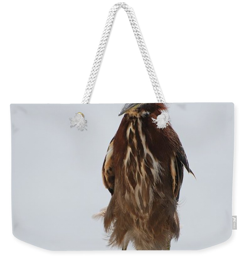 Birds Weekender Tote Bag featuring the photograph Angry Bird by Rob Hans