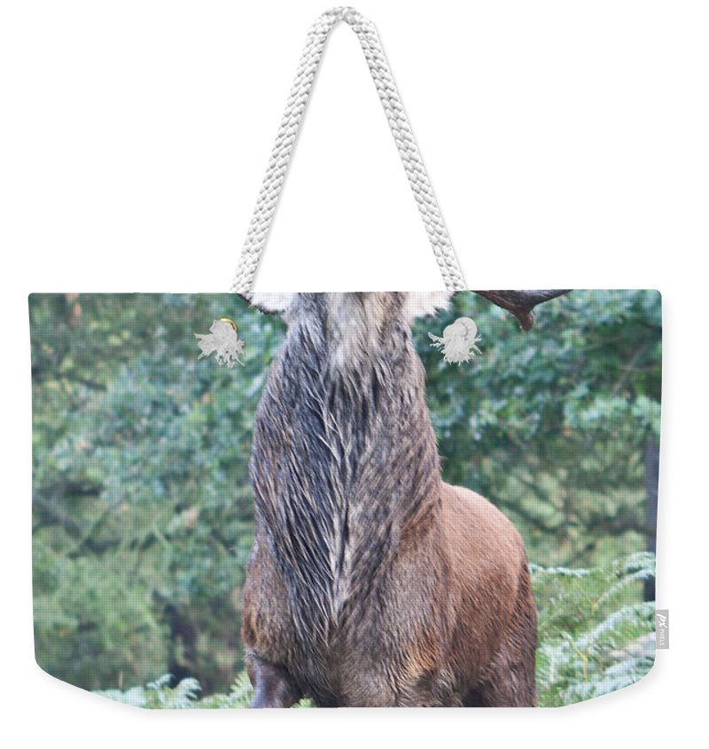 Stag Weekender Tote Bag featuring the photograph Angry Stag by Dawn OConnor