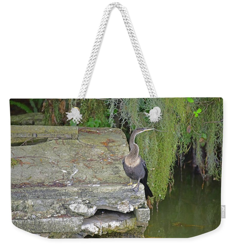 Animals Weekender Tote Bag featuring the photograph Anhinga by Deborah Good