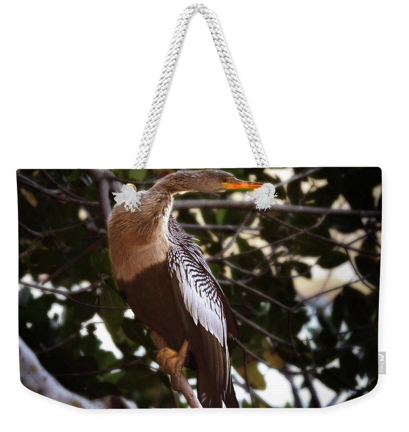 Anhinga Weekender Tote Bag featuring the photograph Anhinga Water Fowl by Joseph G Holland