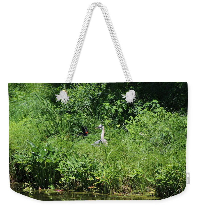 Marsh Weekender Tote Bag featuring the photograph Annoyed - Heron and Red Winged Blackbird 5 of 10 by Colleen Cornelius