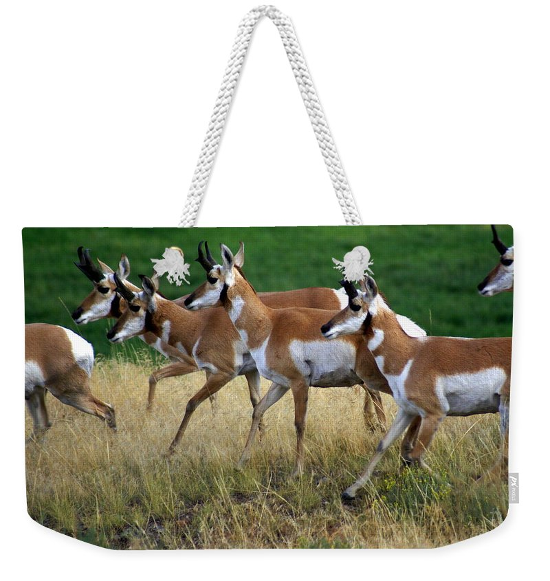 Wildlife Weekender Tote Bag featuring the photograph Antelope 1 by Marty Koch