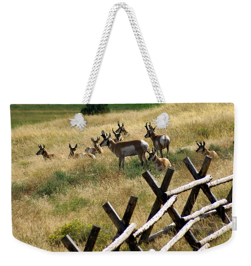 Wildlife Weekender Tote Bag featuring the photograph Antelope 2 by Marty Koch