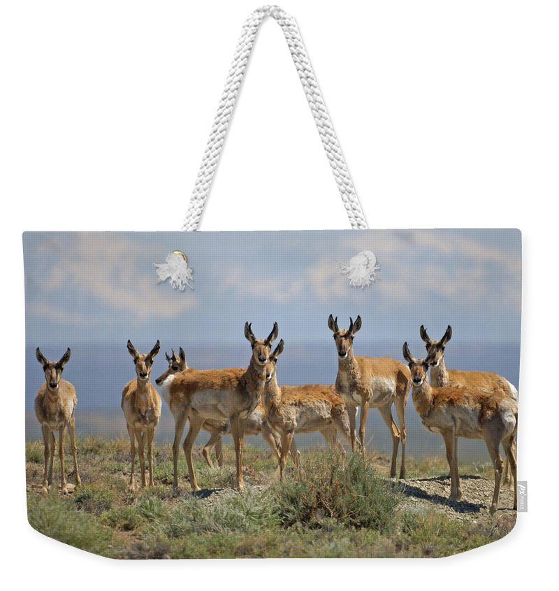 Antelope Weekender Tote Bag featuring the photograph Antelope by Heather Coen