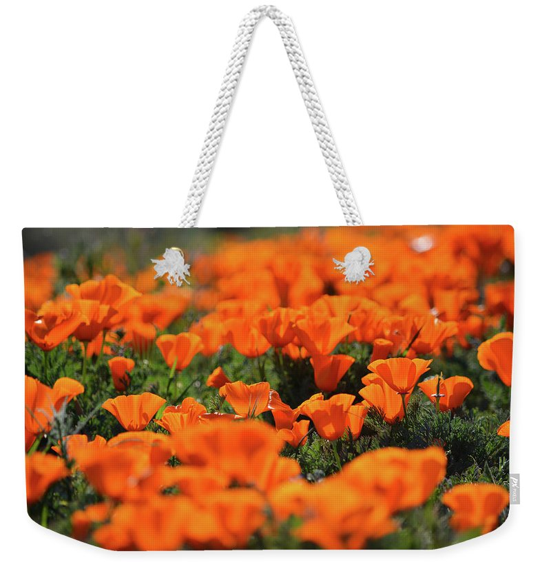 Antelope Valley California Poppy Reserve Weekender Tote Bag featuring the photograph Antelope Valley California Poppies by Kyle Hanson