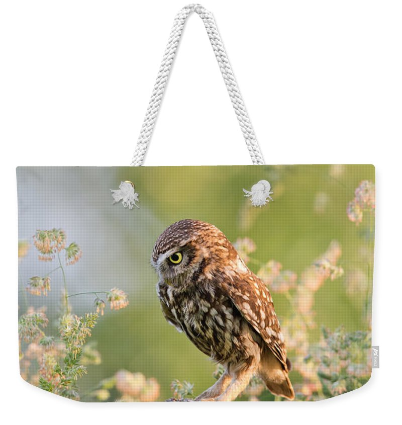 Little Owl Weekender Tote Bag featuring the photograph Anticipation - Little Owl Staring At Its Prey by Roeselien Raimond