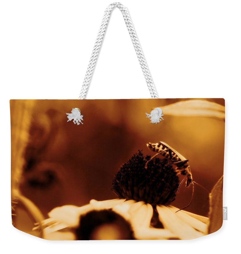 Leatherwing Weekender Tote Bag featuring the photograph Anyone Else Down There - Gold Glow by Angela Rath