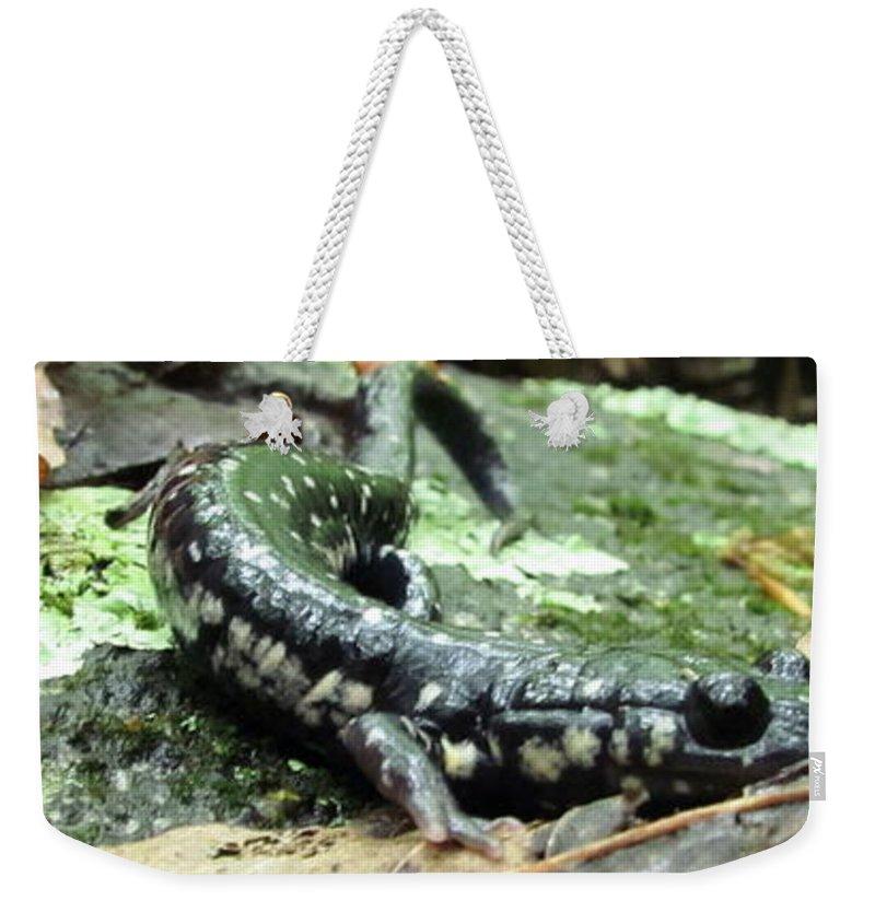 Slimy Salamander Photographs Slimy Salamander Canvas Prints Appalachian Mountain Nature Amphibian Photographs Biodiversity Weekender Tote Bag featuring the photograph Appalachian Slimy Salamander by Joshua Bales
