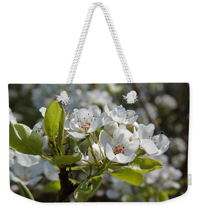 Card Weekender Tote Bag featuring the photograph Apple Blossom by Bob Kemp