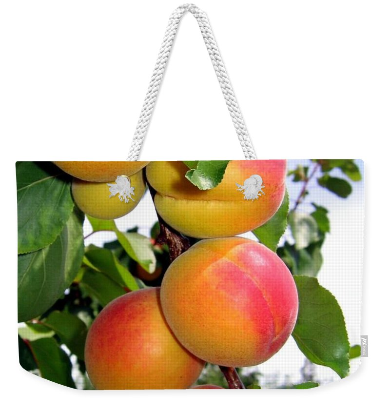 Apricots Weekender Tote Bag featuring the photograph Apricots by Will Borden