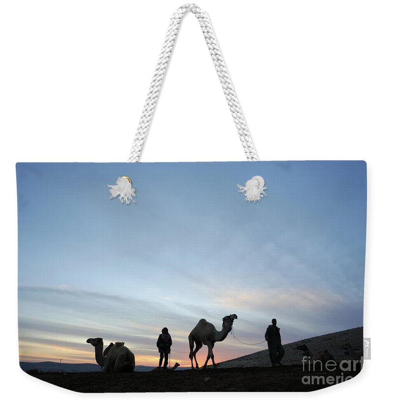 Middle East Weekender Tote Bag featuring the photograph Arabian Camel At Sunset by PhotoStock-Israel