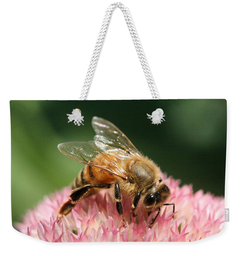 Bee Weekender Tote Bag featuring the photograph Arched by Angela Rath