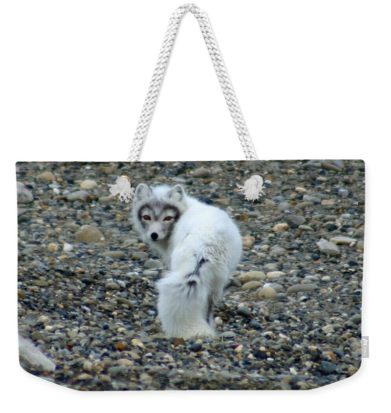 Alaska Weekender Tote Bag featuring the photograph Arctic Fox by Anthony Jones