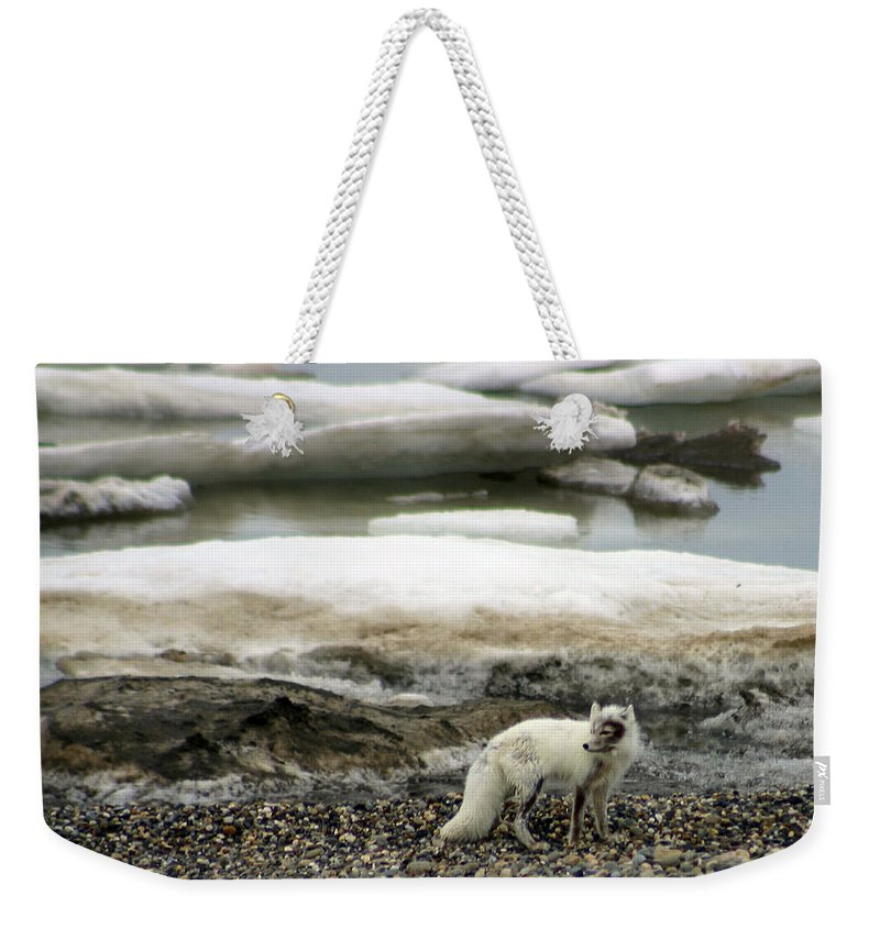 Fox Weekender Tote Bag featuring the photograph Arctic Fox By Frozen Ocean by Anthony Jones