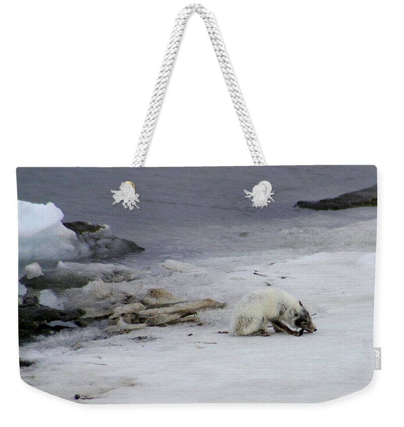 Arctic Fox Weekender Tote Bag featuring the photograph Arctic Fox Eating by Anthony Jones