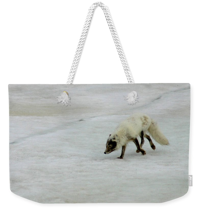 Arctic Fox Weekender Tote Bag featuring the photograph Arctic Fox On Ice by Anthony Jones