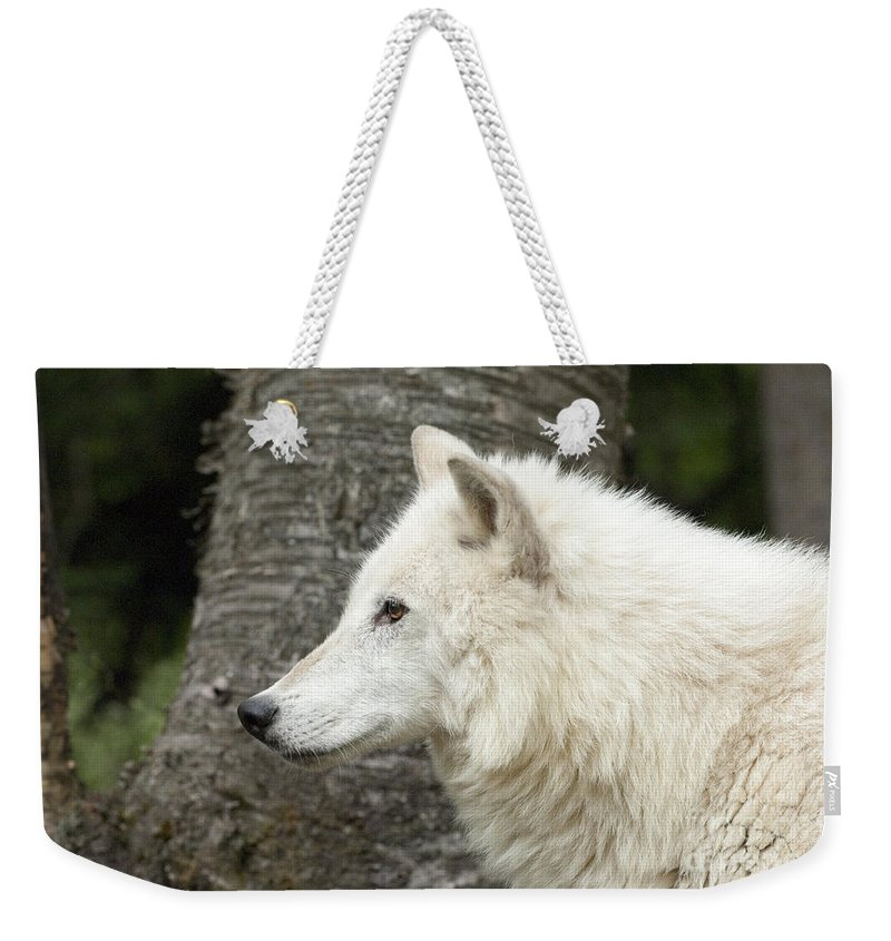 Wolf Weekender Tote Bag featuring the photograph Arctic Wolf - On Watch by Sandra Bronstein