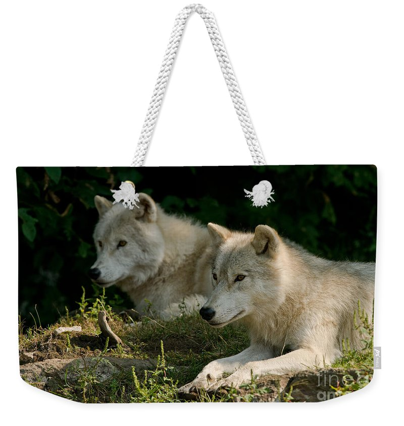 Arctic Wolf Weekender Tote Bag featuring the photograph Arctic Wolf Pictures 1268 by World Wildlife Photography