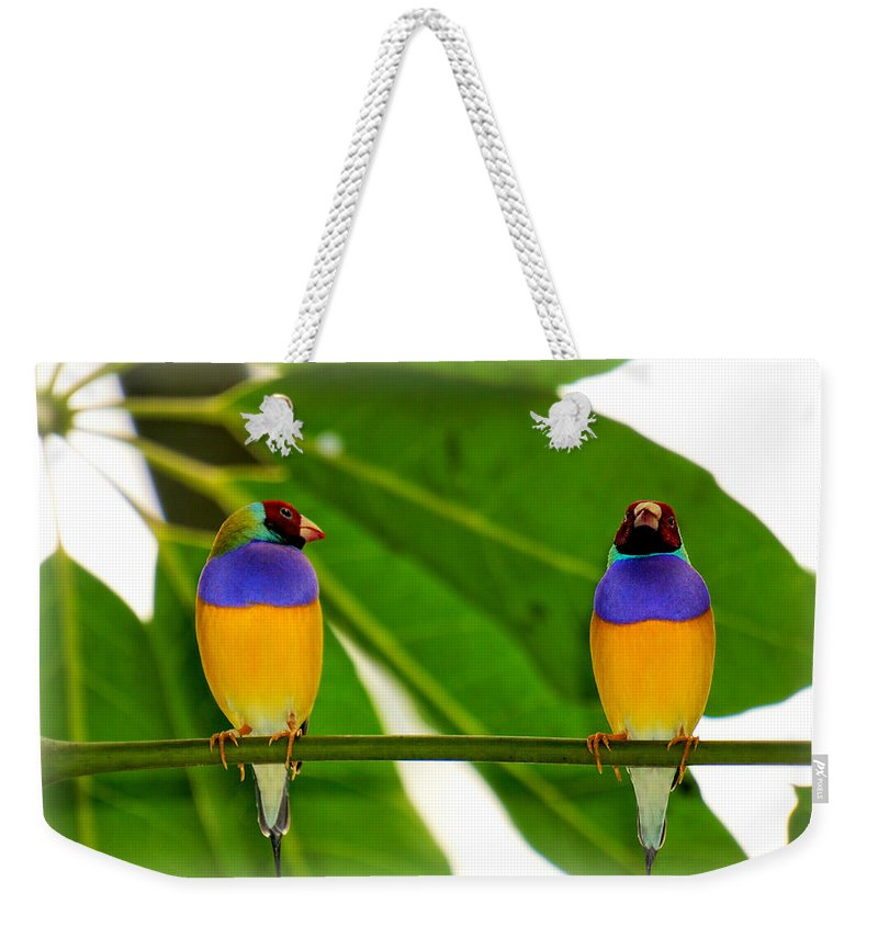 Little Bird Weekender Tote Bag featuring the photograph Are You Serious? by Lilia D