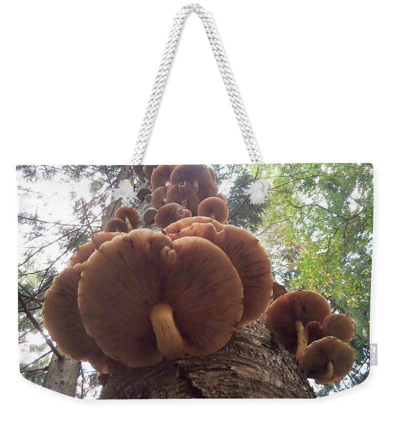 Mushrooms Weekender Tote Bag featuring the photograph Armillaria Autumn On A Tree Trunk by Yuri Hope