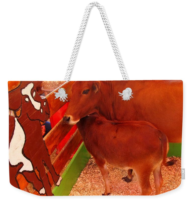Cow Weekender Tote Bag featuring the photograph Art Critic by Ian MacDonald