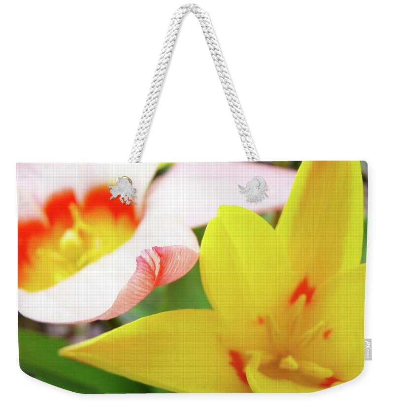 Tulip Weekender Tote Bag featuring the photograph Art Prints Pink Tulip Yellow Tulips Giclee Prints Baslee Troutman by Baslee Troutman