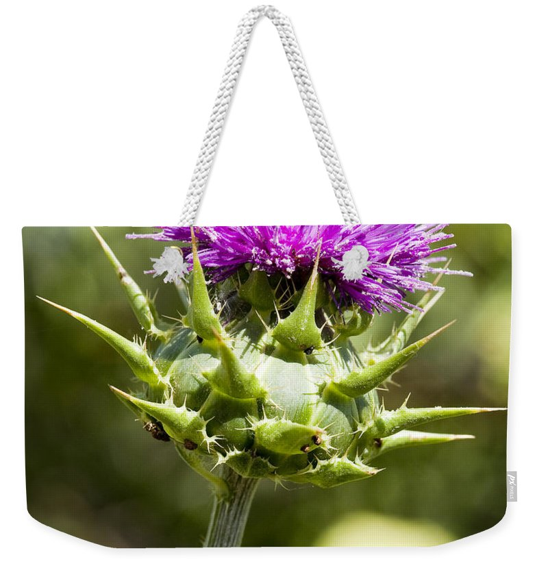 Artichoke Thistle Weekender Tote Bag featuring the photograph Artichoke Thistle 3 by Kelley King