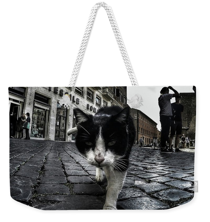 Cat Weekender Tote Bag featuring the photograph Street Cat by Nicklas Gustafsson